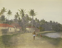Scenery near Colombo. 24935